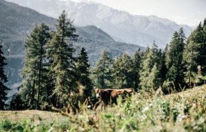 Fotoreportage, Almleben, Landschaftsfotografie, Österreich, Alpen, Berge, Larcher Alm, Österreich, E5